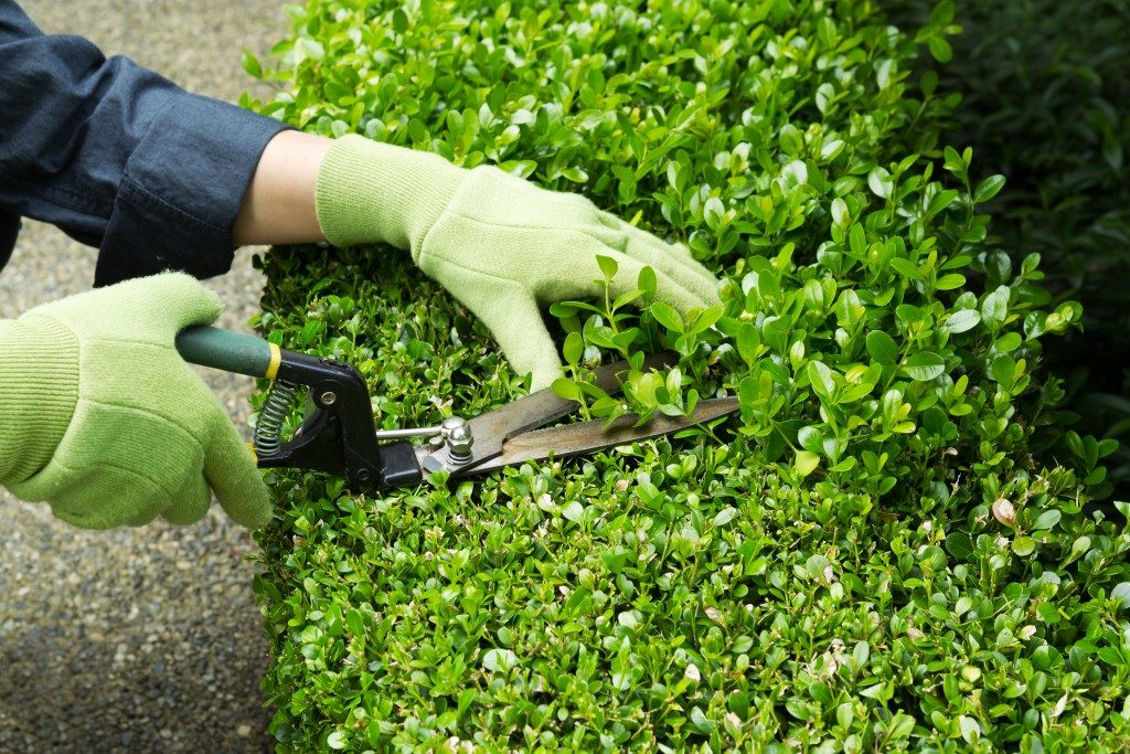 trimming hedges and landscaping